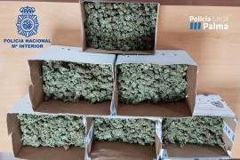 Dos detenidas en Palma tras desmantelar la Policía una plantación de marihuana