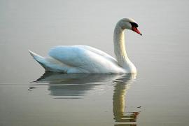 Crece el avistamiento de aves raras en Mallorca en plena recesión poblacional