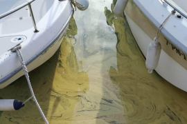 El polen tiñe de amarillo el mar del Port de Sóller