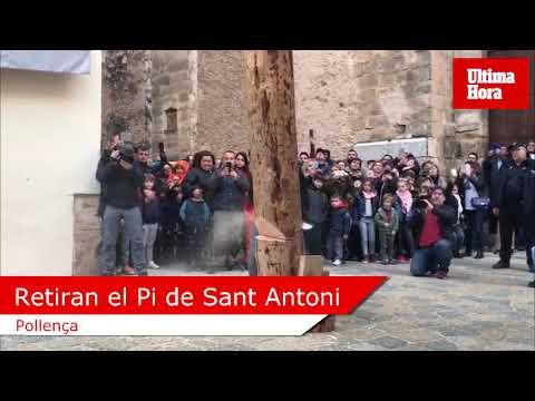 Pollença retira el Pi de Sant Antoni