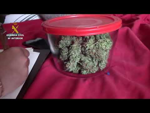 Detenidas diez personas por una treintena de robos y venta de marihuana en Felanitx