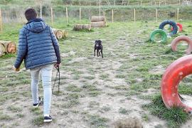 El Colegio de Veterinarios y Baldea apoyan fijar una tasa por tenencia de perros en Inca