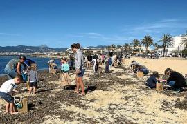 La lucha contra el plástico en las playas de Palma