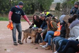 Desfile solidario para buscar hogares para perros y gatos de Son Reus