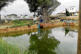 El promotor que vertió toneladas de lodo en es Clot en Alcúdia reanuda las obras