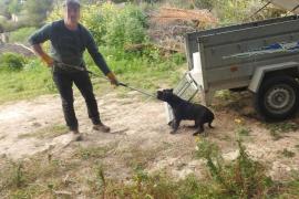 Abate en Andratx a un perro que entró a la finca de su vecino y mató varias ovejas