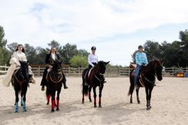 Caballos de raza mallorquina: de 33 en 1986 a 328 en 2019
