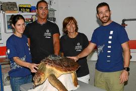 Reaparece Lasi, la tortuga liberada en Mallorca en marzo de 2018