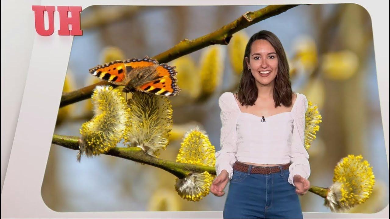 ¿Cómo combatir la alergia primaveral?