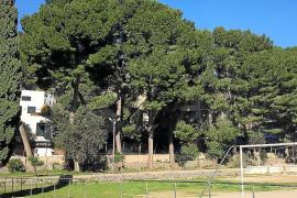 El Consistorio de Sóller destina 4.000 euros a estudiar el potencial riesgo de caída de 40 árboles