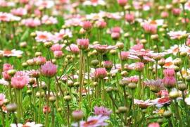 La primavera registrará temperaturas por encima de lo habitual en Baleares