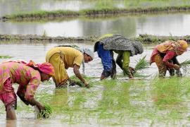 El 40% de los alimentos del mundo se pierde entre la cosecha y el consumidor