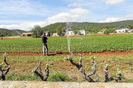 Un centenar de edificaciones agrarias se ha legalizado con la 'ley Company'