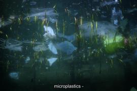 CineCiutat proyecta 'Out of plastic' y acoge un debate sobre las consecuencias ambientales