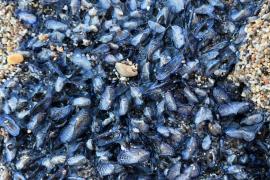 Miles de 'Velas de mar' llenan el Port de Sóller