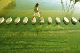 Paso verde