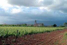El IES Binissalem ofertará el primer grado medio de FP sobre vino y aceite de Baleares
