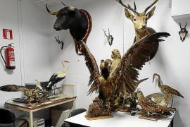 Lluc cede su colección de historia natural al Consell Social de la UIB
