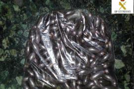 Detenido en Son Sant Joan un marroquí con 149 dátiles de hachís en su organismo