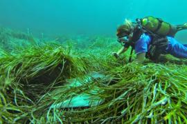 El Govern balear destina 740.000 euros de la ecotasa a cartografiar la posidonia
