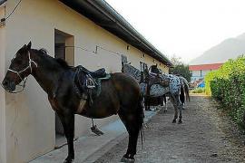 El Club d'Equitació de Pollença, investigado por apropiarse de instalaciones municipales