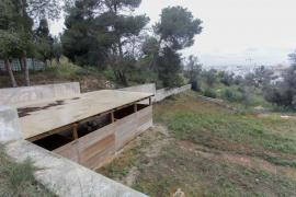 La presencia de ovejas y cabras en la Necrópolis de Puig des Molins, en imágenes (Fotos: Daniel Espinosa).