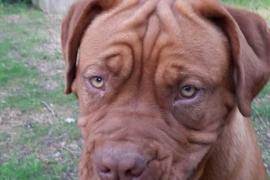 1.500 euros para quien encuentre a Duna, una perra desaparecida en Pórtol