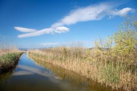 El Govern ampliará el Parc de s'Albufera un 20 %
