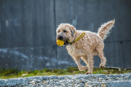 La infracción más común en Palma: pasear al perro suelto