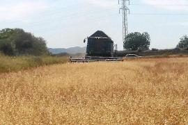 Mallorca presenta un déficit de lluvias del 60 % en el primer trimestre del año