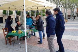 Algunos municipios de Mallorca consultan sobre el modelo de estado
