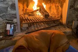 Localizan a Duna, la perra desaparecida en Pòrtol