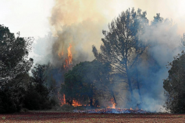 Una quema «imprudente» en un día ventoso origina un gran incendio en Santa Gertrudis