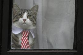 ¿Qué ha pasado con el gato de Assange?