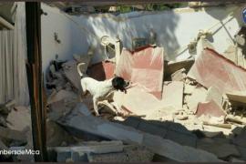 Muere Perry, el perro que ayudó a buscar a las víctimas de Sant Llorenç