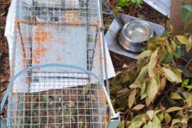 Más de cuarenta municipios capturarán y castrarán gatos asilvestrados en sus calles