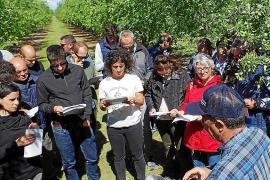 El modelo agrícola de California contra la 'Xyllela' genera disparidad de opiniones