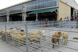 Arrancan con éxito las ventas de cordero local en la campaña de Semana Santa