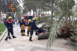 Una palmera cede a la fuerza del viento en pleno Paseo Sagrera