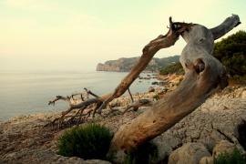 L'arbre i el mediterrani