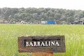 El Consell denunciará ante la Fiscalía las competiciones de polo en sa Barralina, en Campos