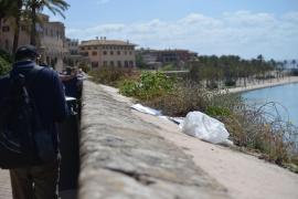 Palma suspende en limpieza