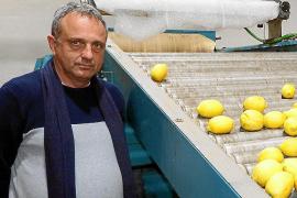Malestar en la Cooperativa de Sóller por perder la ayuda de la 'ecotasa'