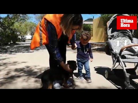 'Rony', un perro atrapado en Son Reus por la burocracia
