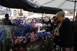 Costitx en Flor, un viaje único al país de las maravillas