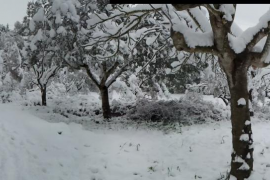 Imatge d'un hivern a Mallorca