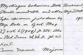 Ella fue la científica que rescató del olvido al 'Myotragus'