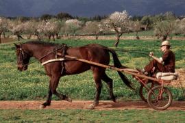 Trotones, una tradición en Mallorca