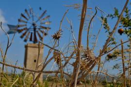 Mallorca: molinos y granadas