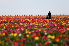 La polémica del glifosato, el pesticida más utilizado del mundo